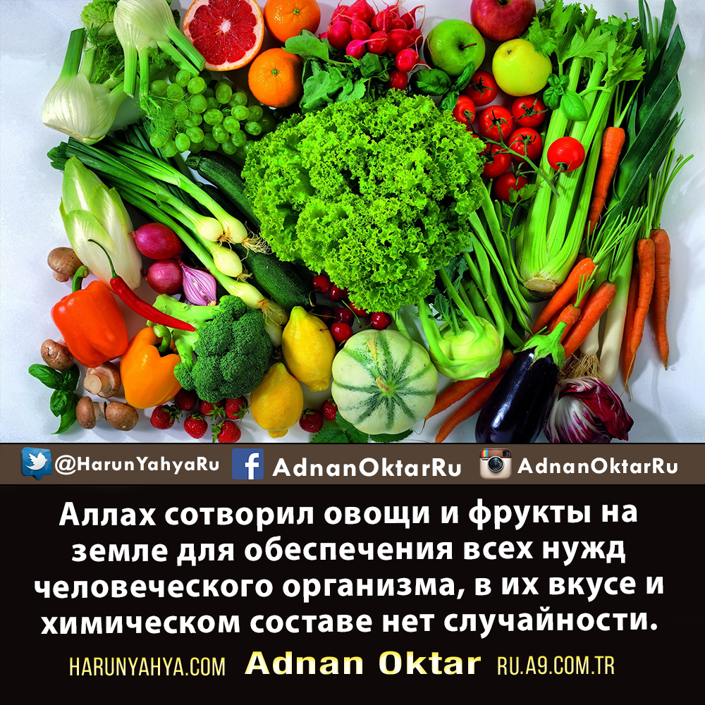 "<table style=""width: 100%;""><tr><td style=""vertical-align: middle;"">Аллах сотворил овощи и фрукты на земле для обеспечения всех нужд человеческого организма, в их вкусе и химическом составе нет случайности</td><td style=""max-width: 70px;vertical-align: middle;""> <a href=""/downloadquote.php?filename=1490772890575.jpg""><img class=""hoversaturate"" height=""20px"" src=""/assets/images/download-iconu.png"" style=""width: 48px; height: 48px;"" title=""Download Image""/></a></td></tr></table>"
